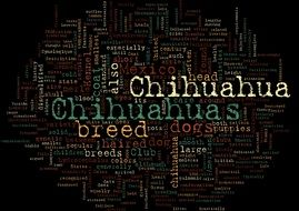 lettering chihuahuas on a black background