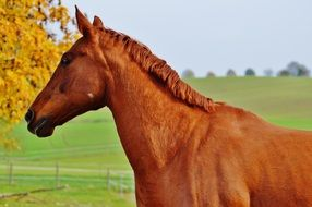 well-groomed horse in autumn