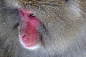 Baboon Primate