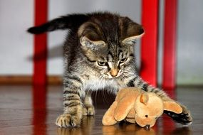 Small playing kitten