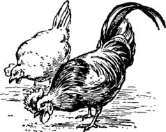 rawing on which the poultry peck the grain