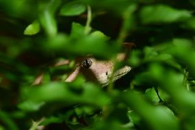 snake hiding in green foliage