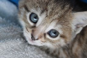 small Kitten looking up