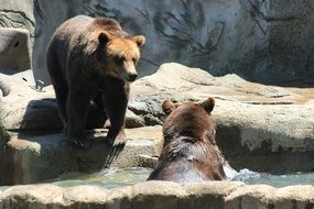 Picture of Brown Bears in the zoo