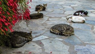 resting lazy cats in skiathos