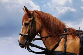 harness a farm horse