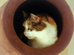 domestic cat in the pipe