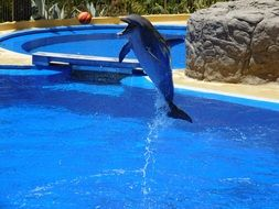 jumping dolphin in dolphinarium