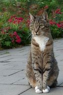 Cute domestic cat sits in the garden