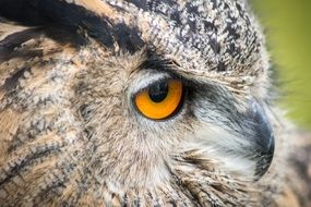side view of owl\'s head
