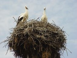 two storks in a large nest against the sky