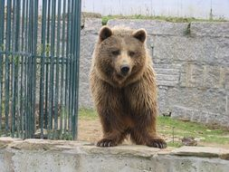 cute Bear Animal in Zoo