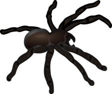 graphic image of a big black spider