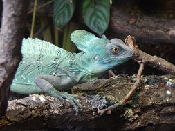 Chameleon in the zoo