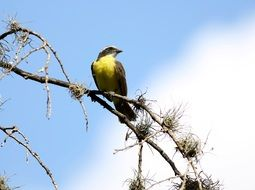 yellow bird on a tree branch against the sky
