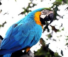 pretty Macaw Parrot