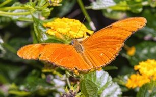 Orange butterfly flower insect nature