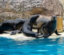 perfect beautiful Sea Lions
