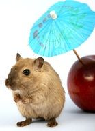 lovely hamster and red apple with cocktail umbrella