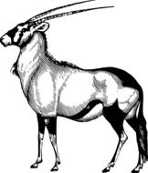 black and white image of an antelope