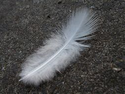 Feather White