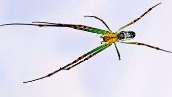 Photo of spider close-up