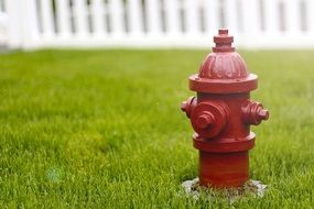 fire hydrant on the street