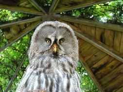 owl in a wooden arbor