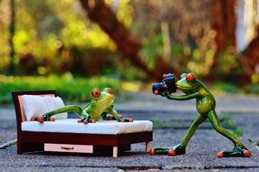photo shoot of funny frogs