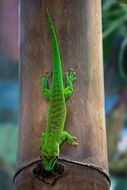 green gecko on a tree trunk