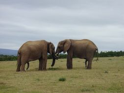 Friendship of the two elephants