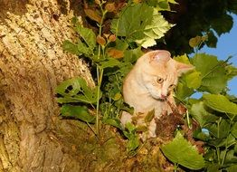 brown cat climbing trees