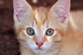 red kitten with green eyes