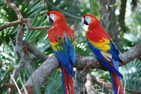 Macaw Red Parrots