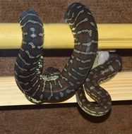 snake on wooden sticks