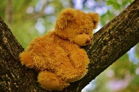 teddy bear on tree