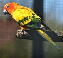 multi colored parrot in the cage