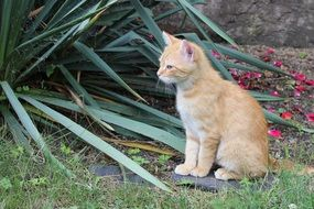 young red cat in the garden