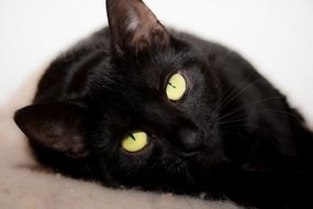 black cat with bright eyes closeup