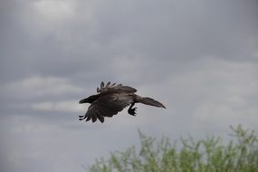 black raven against a cloudy sky