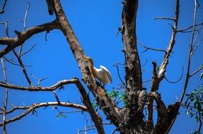 white bird on a tree against a bright blue sky