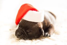 Cute Puppy Dog in red and white santa hat sleeps on carpet