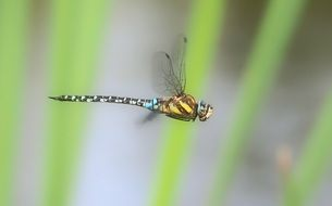adorable and cute Dragonfly In Flight