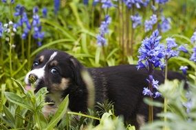 cute sweet puppy on the meadow