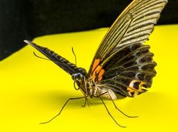 butterfly on a bright yellow surface