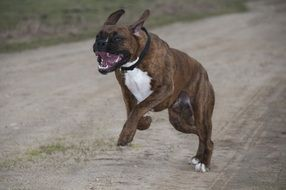 funny young Dog Fast running