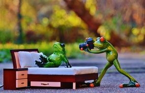 photo shoot of frogs