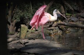 pink flamingo is a water bird