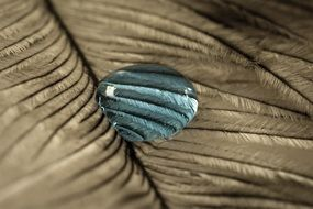 blue water drop on the feather
