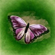 drawing of a purple butterfly on the green background